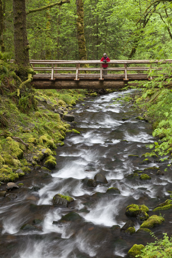 Stock Photo: 1482R-2764 USA, Oregon, Columbia River Gorge, Gorton Creek, Woman standing on footbridge in forest