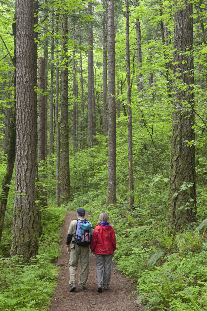 Stock Photo: 1482R-2769 USA, Oregon, Columbia River Gorge, Elowah Falls Trail, People walking through forest