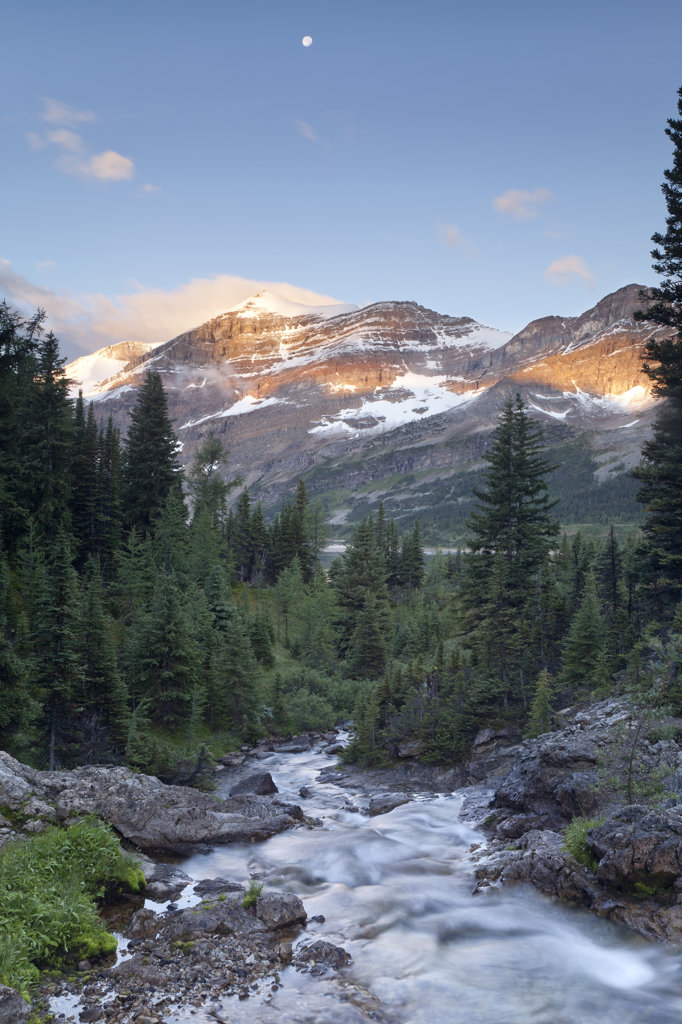 Canada, Mount Assiniboine Provincial Park, Magog Creek meadow at sunrise : Stock Photo