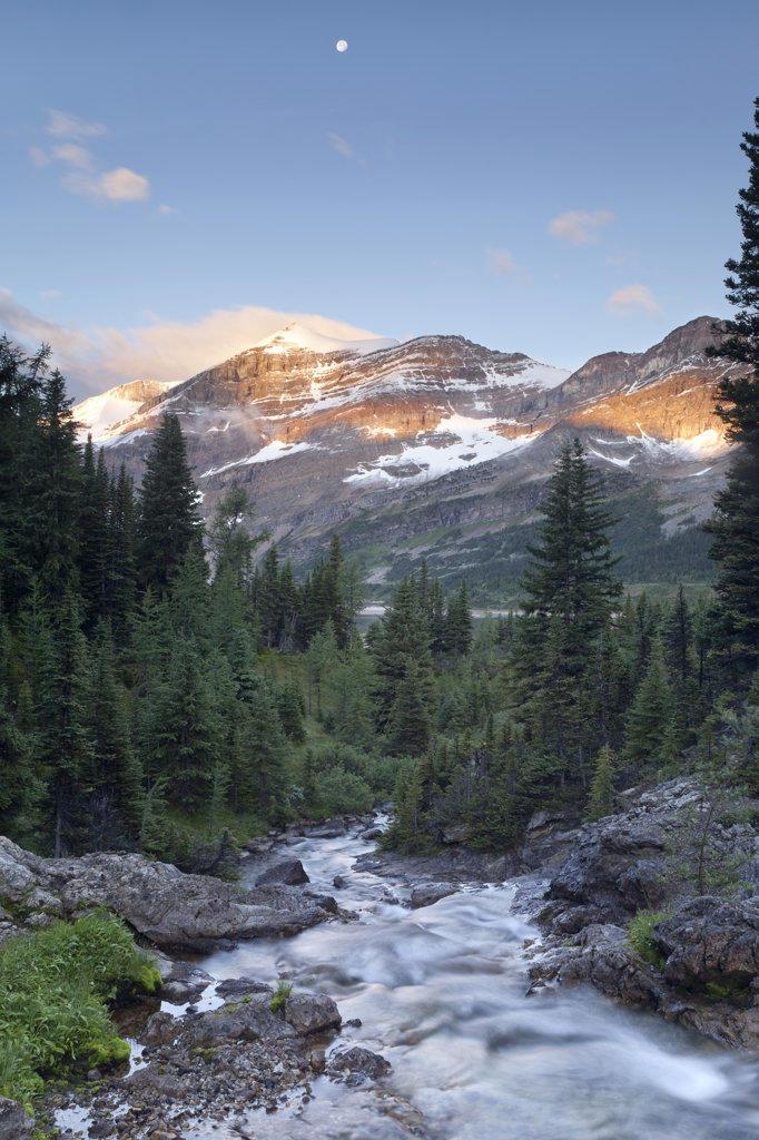 Stock Photo: 1482R-2989 Canada, Mount Assiniboine Provincial Park, Magog Creek meadow at sunrise