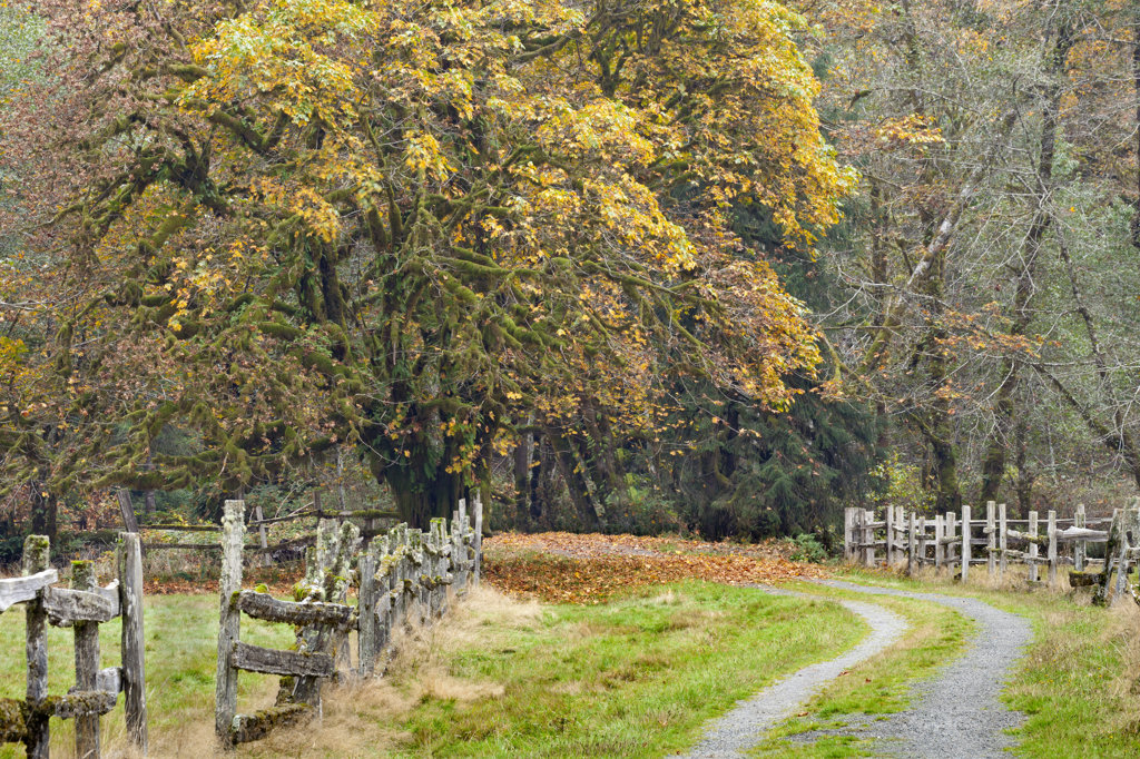 Road passing through farms in autumn, Quinault Rainforest, Kestner Homestead, Olympic National Park, Washington State, USA : Stock Photo