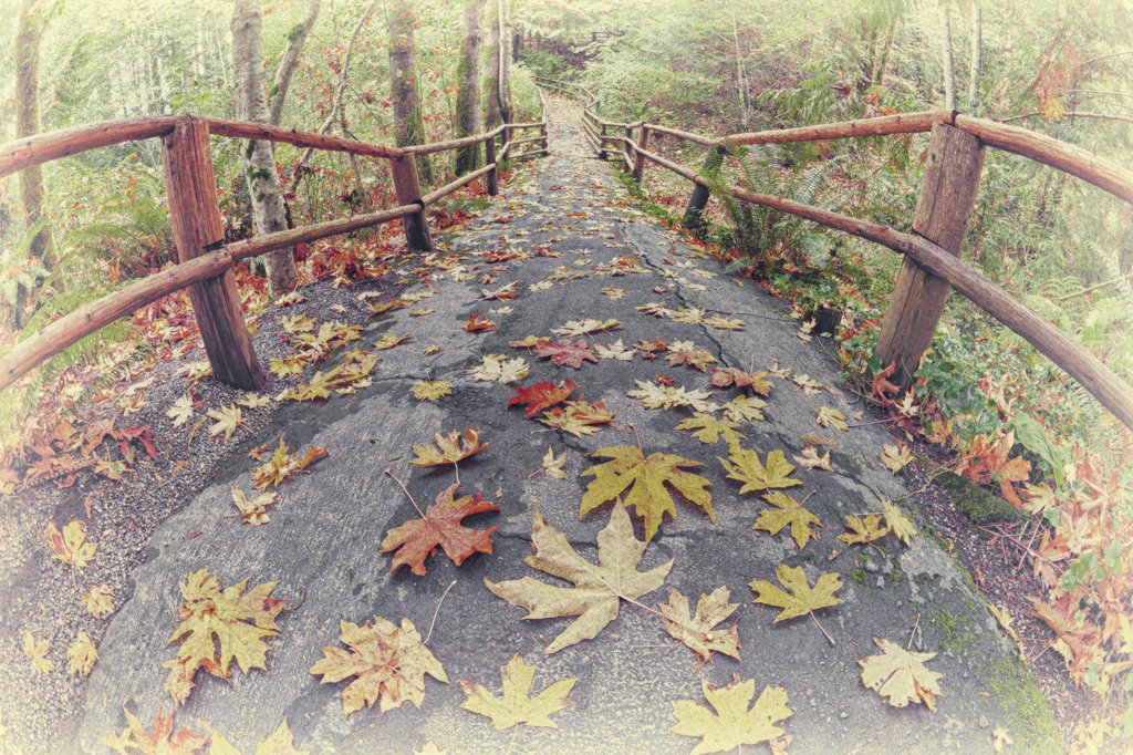 Stock Photo: 1482R-3142 Fall forest with path and bridge