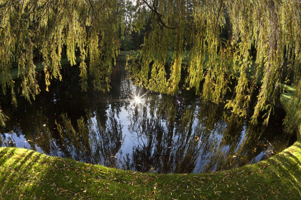 Stock Photo: 1482R-3147 Weeping willow trees and pond