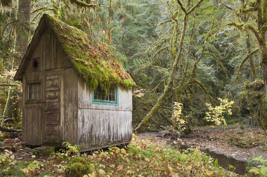 Stock Photo: 1482R-3153 Old cabin in a forest, Olympic National Park, Washington State, USA