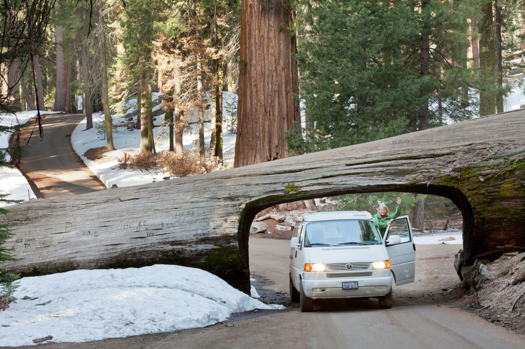 USA, California, Sequoia National Park, Front view of car driving through tree : Stock Photo