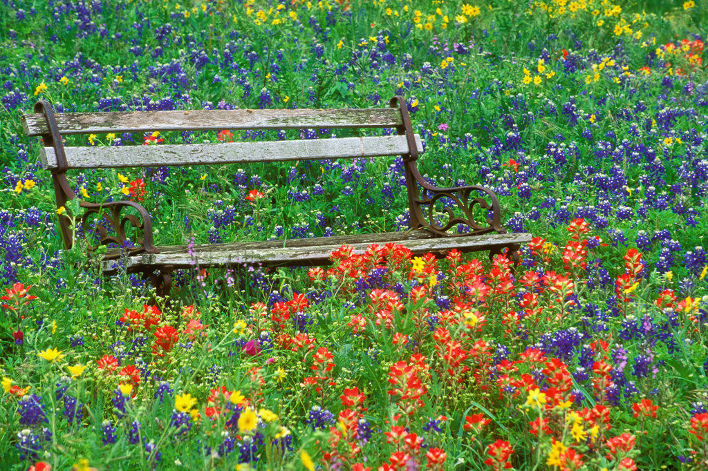 Empty park bench in a park : Stock Photo