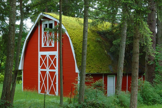 Stock Photo: 1485-333 Barn surrounded by trees, Oregon, USA