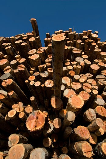 Stock Photo: 1485-437 Low angle view of stack of logs, California, USA