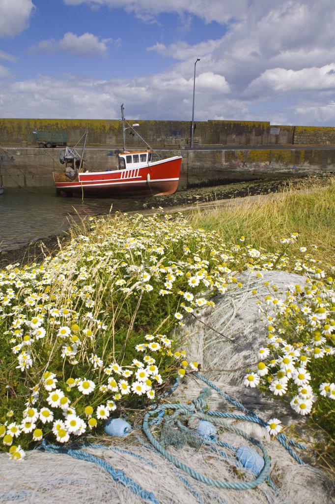 Fishing boat docked near a pier, Helvick Head, County Waterford, Munster Province, Ireland : Stock Photo