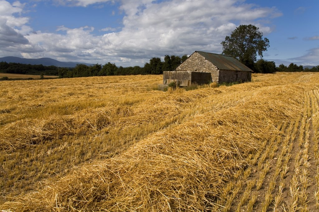 Cottage in a wheat field, Cahir, County Tipperary, Munster Province, Ireland : Stock Photo