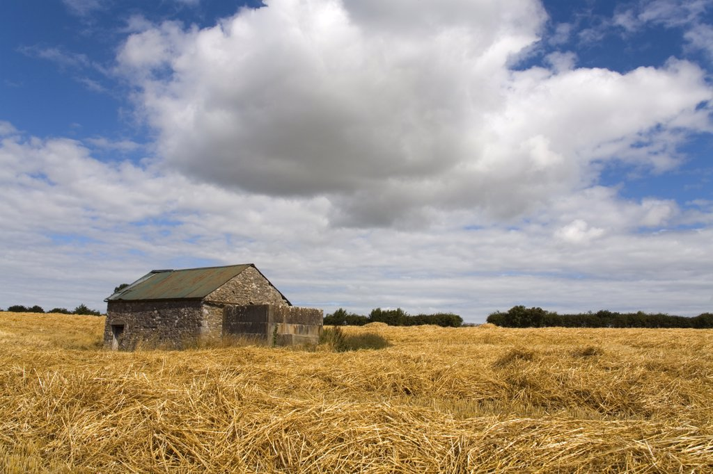 Stock Photo: 1486-11018A Cottage in a wheat field, Cahir, County Tipperary, Munster Province, Ireland