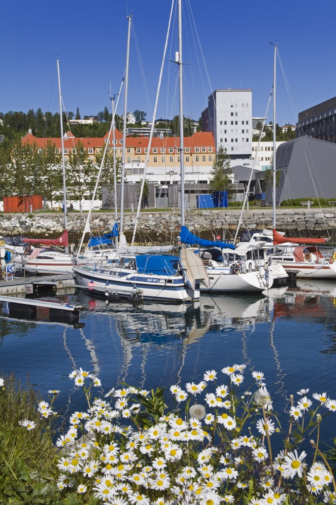 Yachts at a marina, Tromso, Toms County, Nord-Norge, Norway : Stock Photo