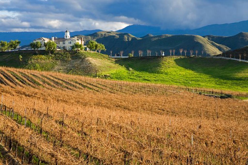 Vines in a vineyard, Leonesse Vineyard, Temecula, Wine Country, California, USA : Stock Photo