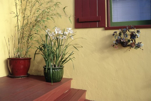 Potted plants on a step of a house, San Diego, California, USA : Stock Photo