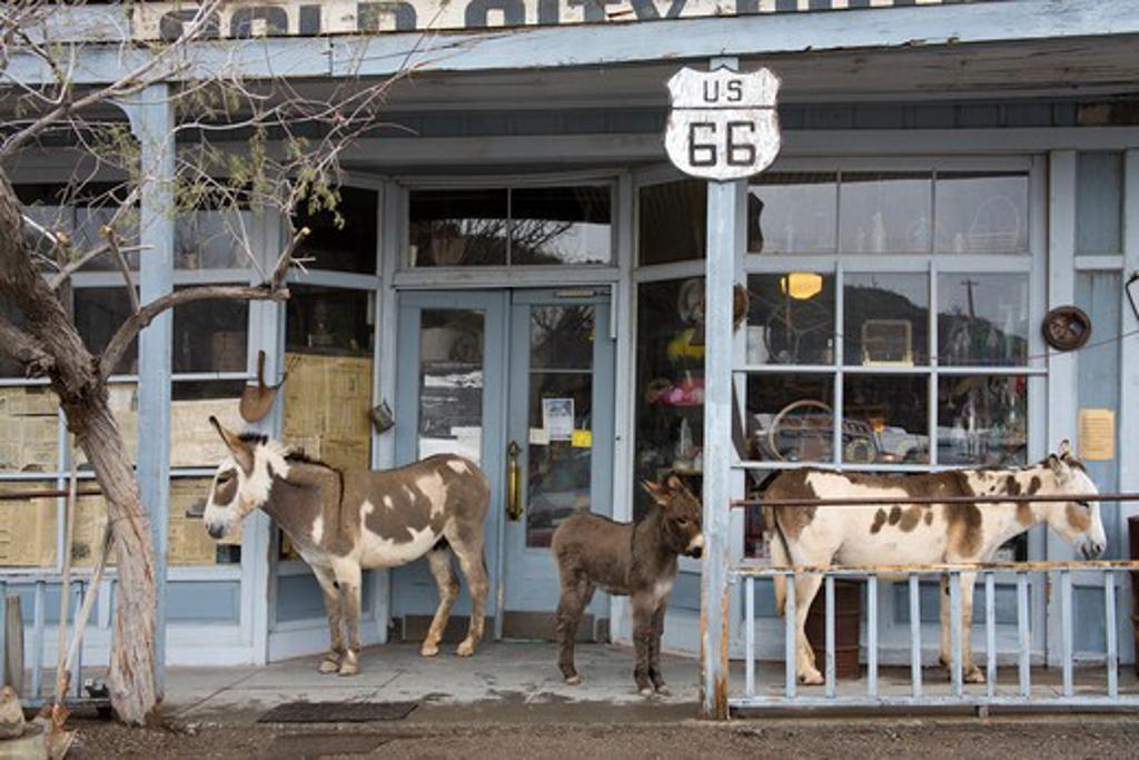 Stock Photo: 1486-12882 USA, Arizona, Wild Burros outside store in Oatman mining town