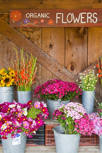USA, California, Monterey County, Carmel Valley, Flower stall at Earthbound Organic Farm : Stock Photo