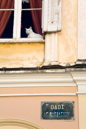 Stock Photo: 1486-14792 Cat in window of a house, Old Town, Corfu Town, Ionian Islands, Greece