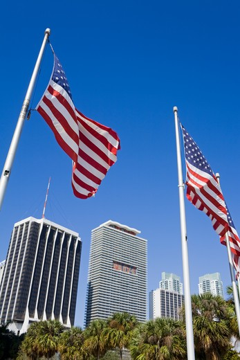American flags in Bayfront Park, Miami, Florida, USA : Stock Photo