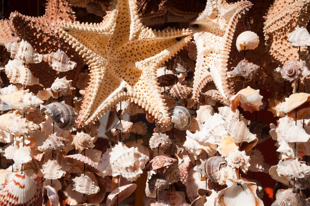 Shells in a store, Puerta Maya, Cozumel, Quintana Roo, Yucatan Peninsula, Mexico : Stock Photo