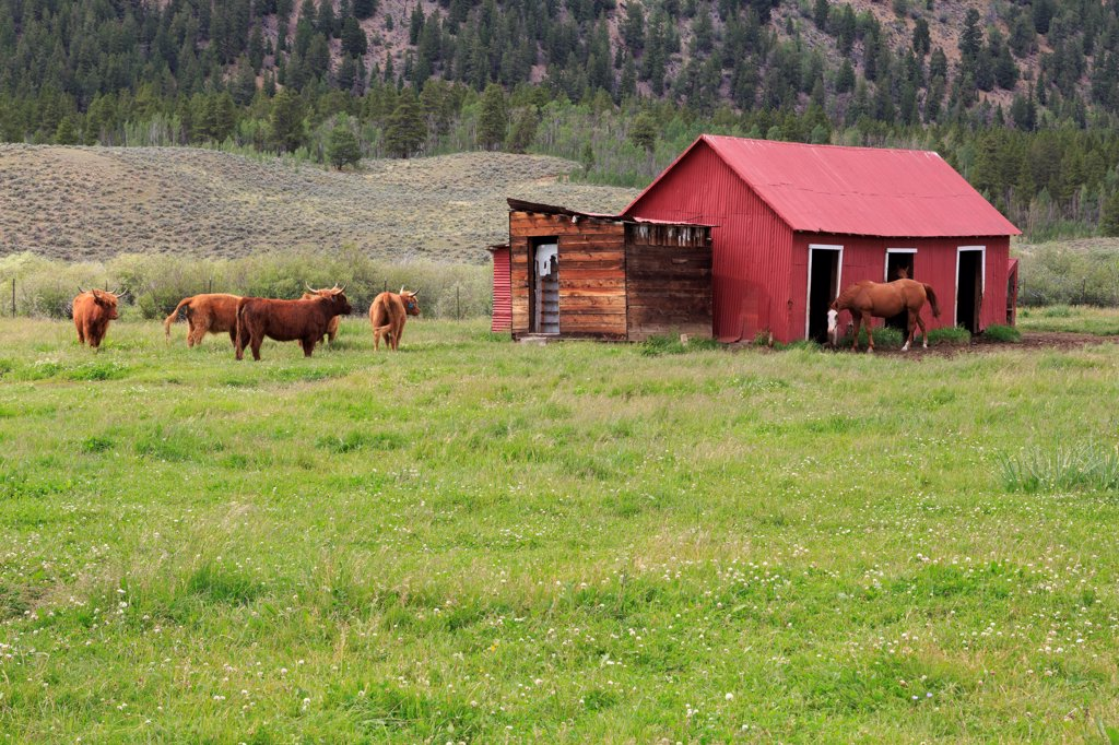 Stock Photo: 1486-16362 USA, Colorado, Leadville, Barn on ranch