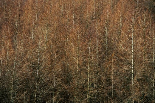 Bare trees in a forest, Nire Valley, County Waterford, Ireland : Stock Photo