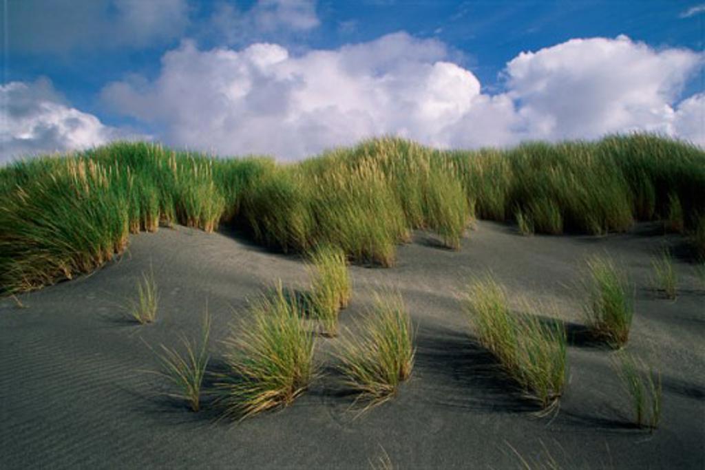 Grass growing on a hill, Portdeha, Aran Islands, Ireland : Stock Photo