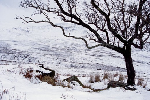 Bare trees on a snow covered landscape, Nire Valley, County Waterford, Ireland : Stock Photo
