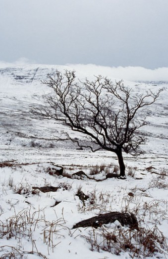 High angle view of a bare tree on a snow covered landscape, Nire Valley, County Waterford, Ireland : Stock Photo
