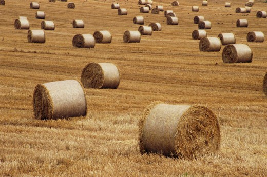Stock Photo: 1486-3311 Hay bales in a field, Ireland