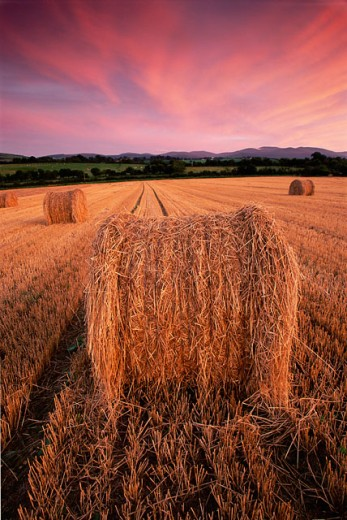 Hay bales on a field at Newcastle, Ireland : Stock Photo