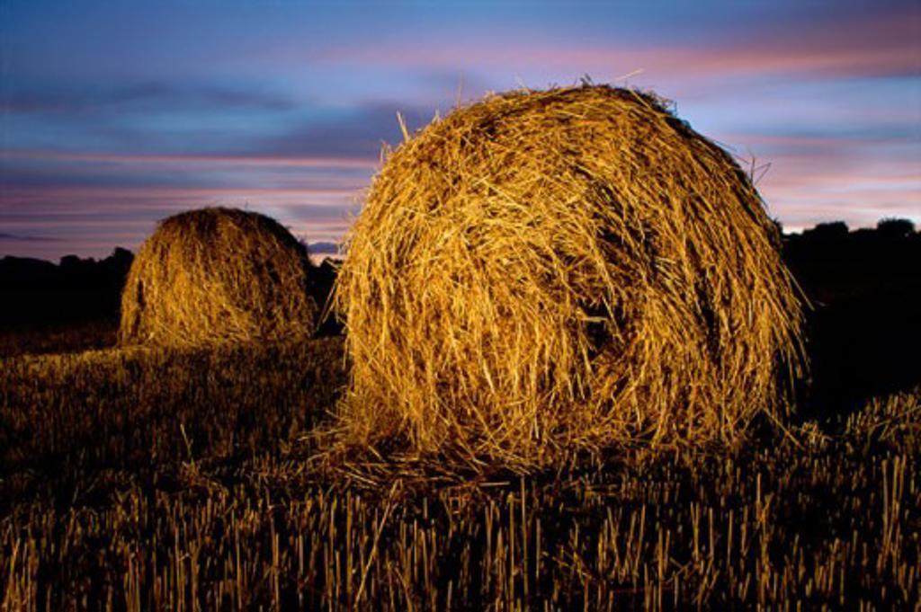 Stock Photo: 1486-3315 Hay bale in a field