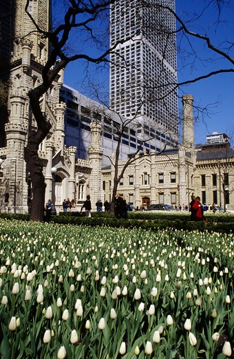 USA, Illinois, Chicago, bed of tulips with pumping station on the background : Stock Photo