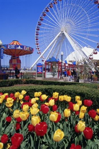 Stock Photo: 1486-3575 Ferris wheel at an amusement park, Navy Pier, Chicago, Illinois, USA
