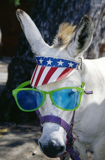 St. Thomas, Charlotte Amalie, donkey with sunglasses and stars and striples hat : Stock Photo