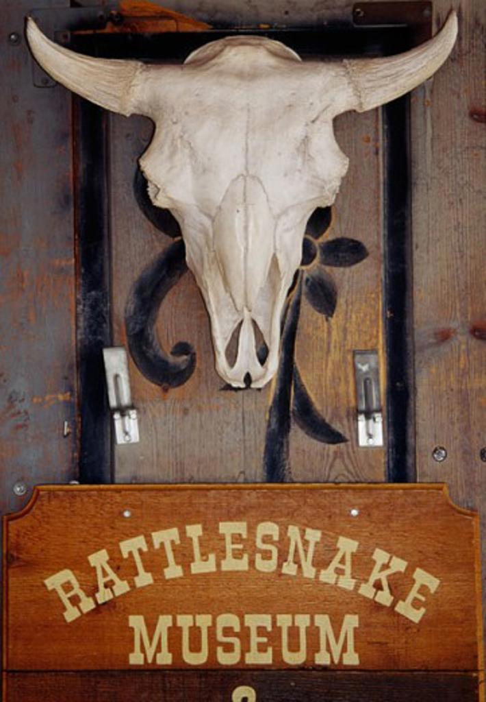 Rattlesnake Museum Albuquerque New Mexico, USA : Stock Photo