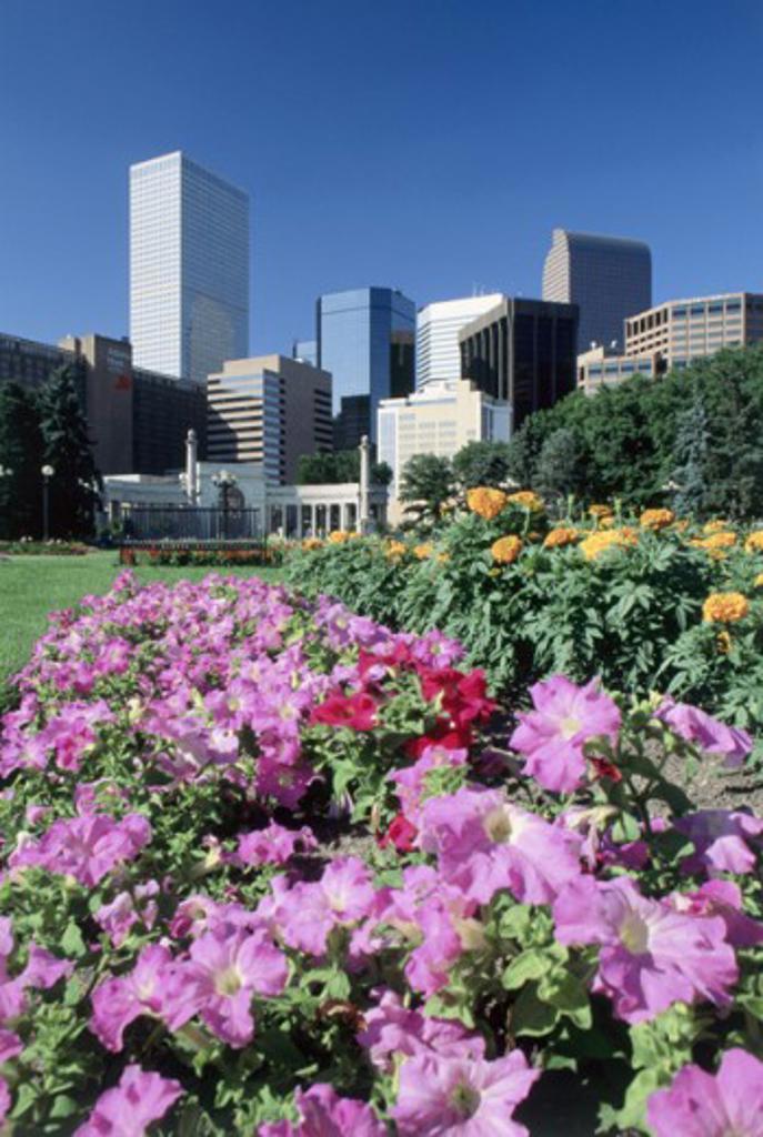 Stock Photo: 1486-4297 High rise buildings seen from a city park, Denver, Colorado, USA