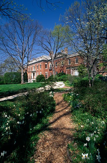 Trees in a garden, Dumbarton Oaks House, Georgetown, Washington DC, USA : Stock Photo
