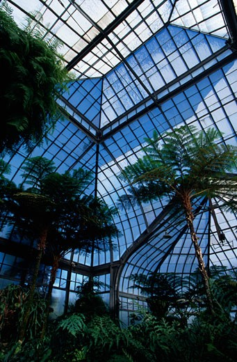 Stock Photo: 1486-539 Plants in a conservatory, Whitcomb Conservatory, Belle Isle Park, Detroit, Michigan, USA