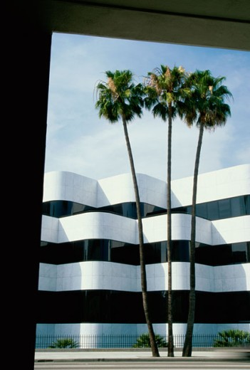 Stock Photo: 1486-6171 Palm trees in front of a building, Beverly Hills, California, USA