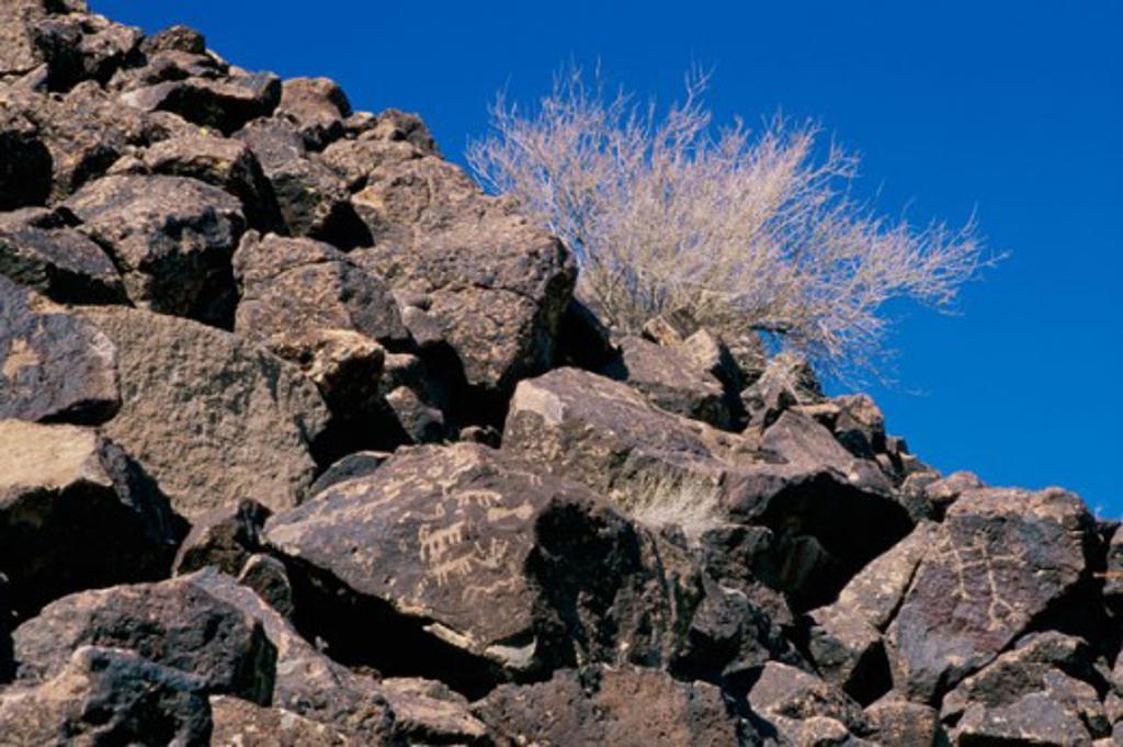 Stock Photo: 1486-6249 Deer Valley Rock Art Center Phoenix Arizona, USA