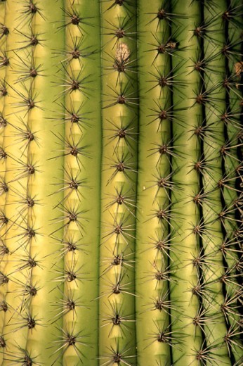 Stock Photo: 1486-6814 Close-up of a cactus plant