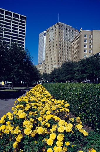 Stock Photo: 1486-746 Flower bed in a public park, Fort Worth, Texas, USA