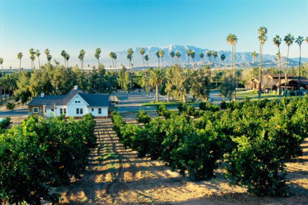 California Citrus State Historic Park California USA : Stock Photo