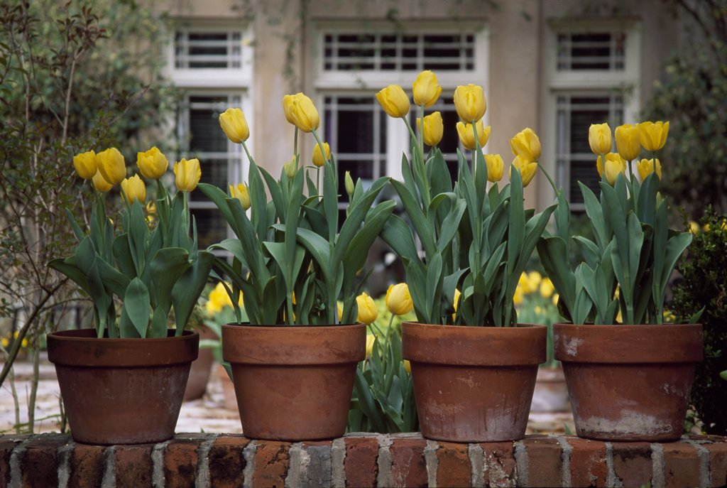Stock Photo: 1486-8062 Four flower pots on a wall in front of a house, Longue Vue House and Gardens, New Orleans, Louisiana, USA