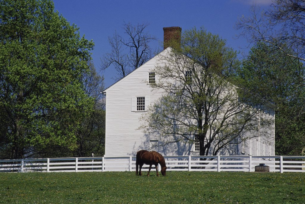 Stock Photo: 1486-9411 Horse grazing in front of a house, Shaker Village, Pleasant Hill, Kentucky, USA