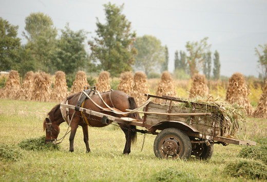 Albania, near Lake Shkodra, Horse and cart in field : Stock Photo