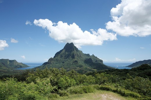 Stock Photo: 1488-149 Trees on mountain, Moorea, Tahiti, French Polynesia