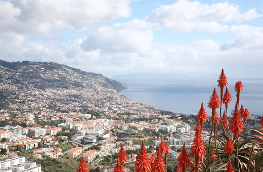 View from botanical gardens, Funchal, Madeira, Portugal : Stock Photo
