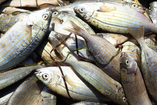 Italy, Sardinia, Marceddi fishing village, Close up of local fish on fish market : Stock Photo