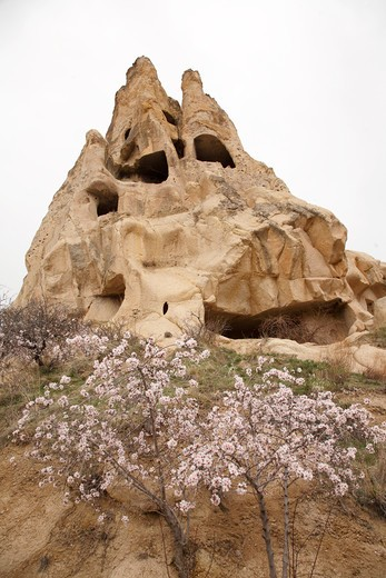 Stock Photo: 1488-837 Cave houses and peach tree, Cappadocia, Central Anatolia, Turkey